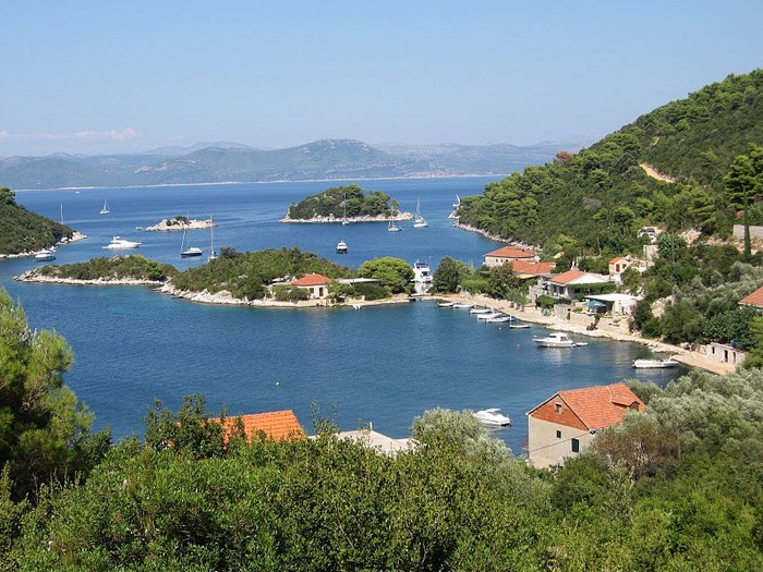 Polace_mljet