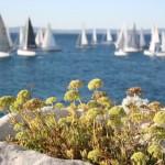 Participation in the regattas can be fun
