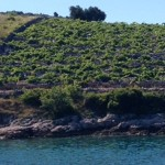 Kremik vineyards